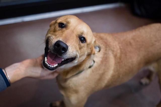 cachorro-sorridente-apos-ser-adotado