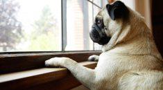 cachorro sozinho em casa