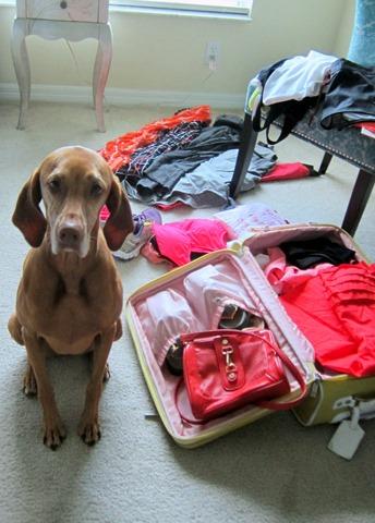 cachorro viagem 10