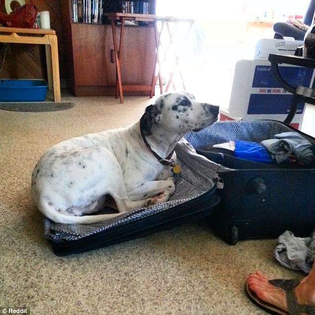 cachorro viagem 3