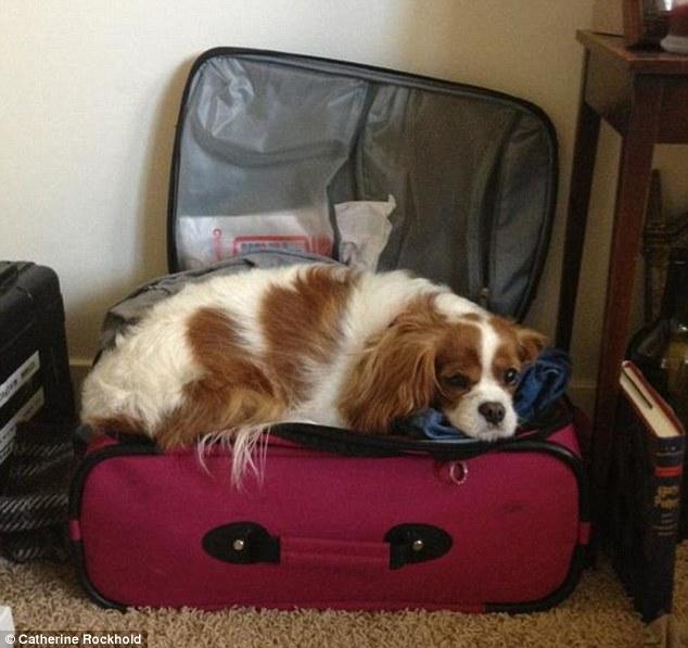 cachorro viagem 5