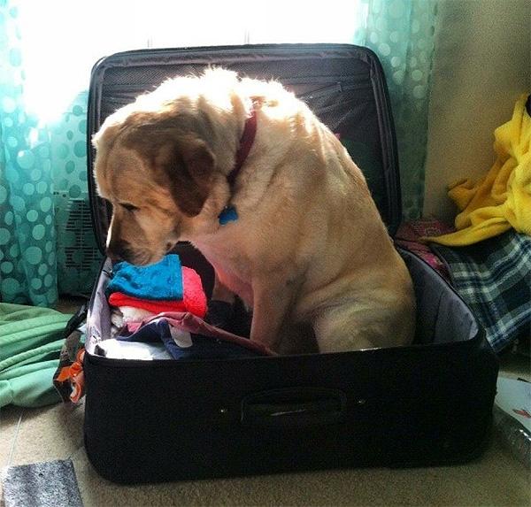 cachorro viagem 9