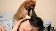 cachorros-acordando-donos