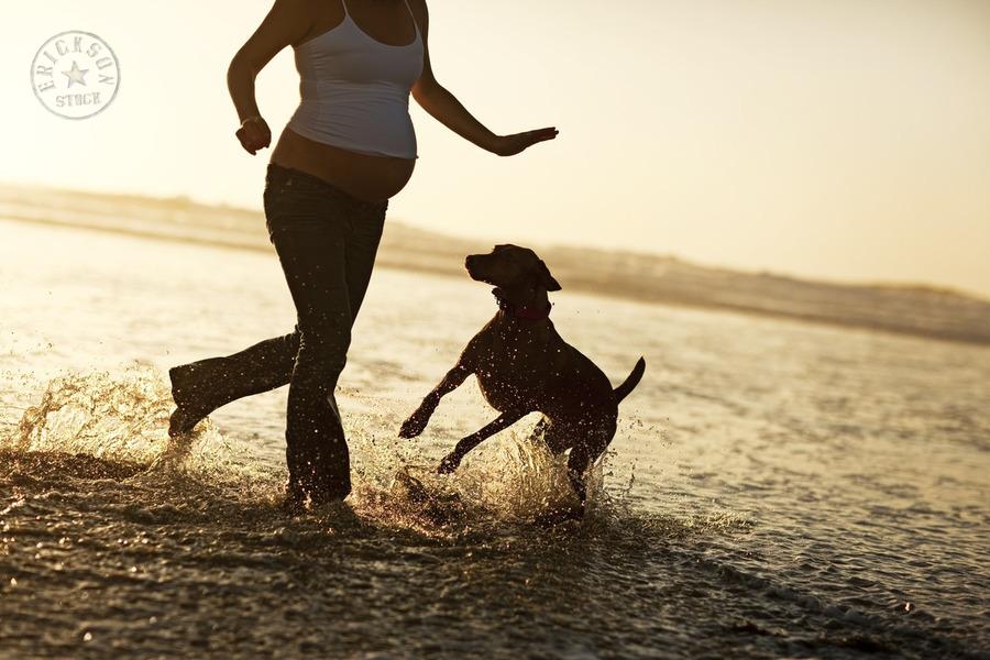 cachorros e gravidas