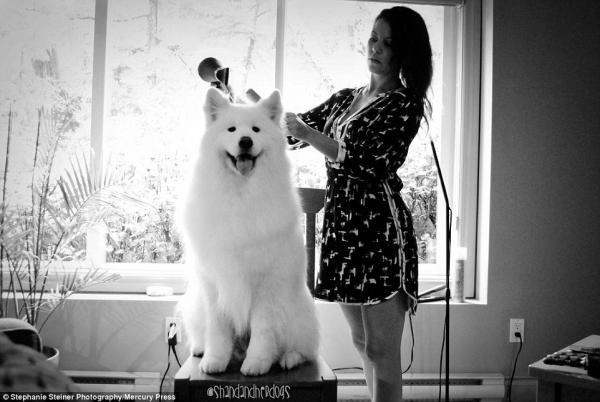 cachorros-estrelas-do-casamento-02