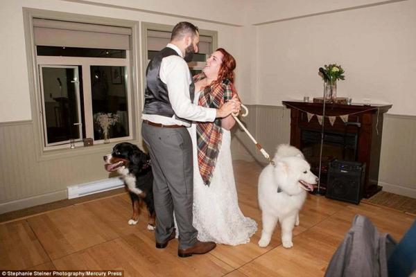 cachorros-estrelas-do-casamento-03