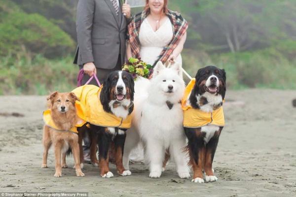 cachorros-estrelas-do-casamento-04