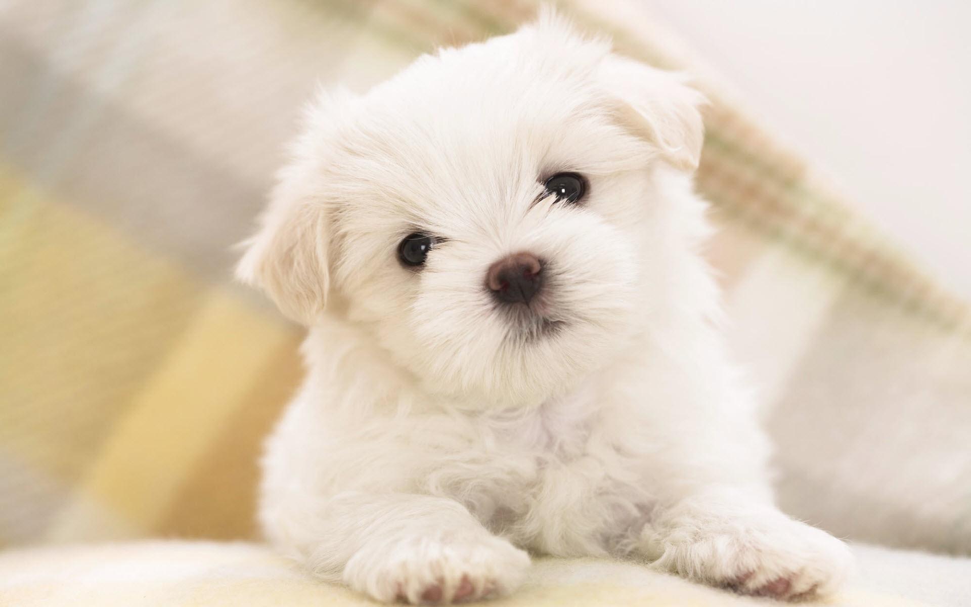 Raças De Cachorros De Pequeno Porte Tudo Sobre Cachorros