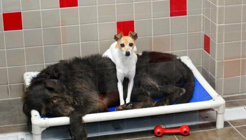 cachorros-abandonados-juntos-dao-amor-e-forca-um-para-o-outro-04