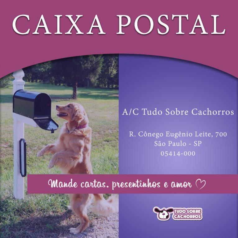 caixa postal tudo sobre cachorros