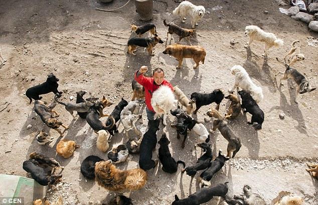 chines-salva-caes-mercado-carne-033