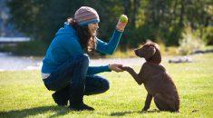 comandos basicos adestramento cachorro