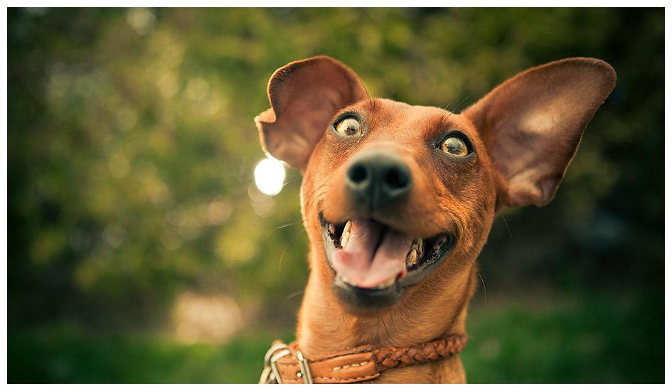 como fazer seu cachorro feliz 2