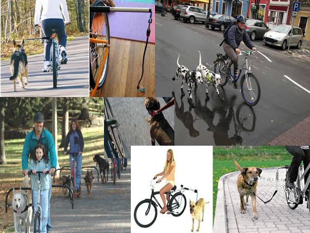 como-levar-seu-pet-para-passear-de-bike-06