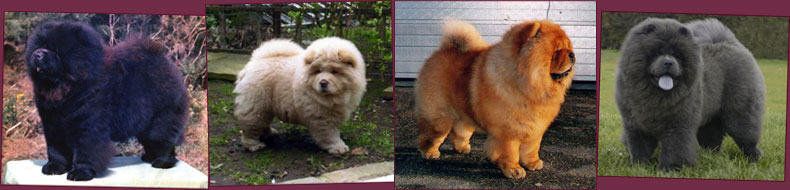 cores do chow chow
