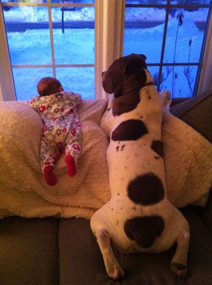 Large Image For Asclepias Incarnata Swamp Milkweed: Cute-big-dogs-and-babies-2