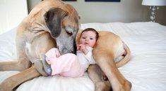 cachorro grande criança pequena