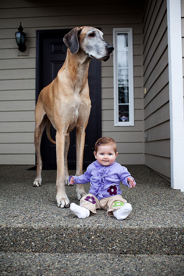 Cute Big Dogs And Babies 35