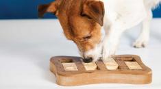 enriquecimento-ambiental-cachorro