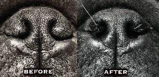 estenose narinas cachorro