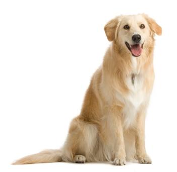 fases da vida cachorro