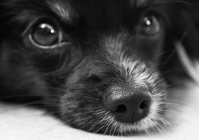 filhote cachorro 10