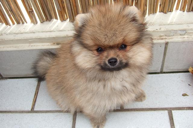 filhote cachorro 3