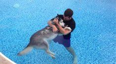 hidroterapia-pra-cachorro