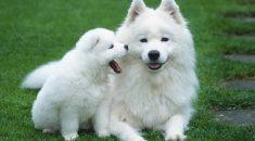 imprinting canino