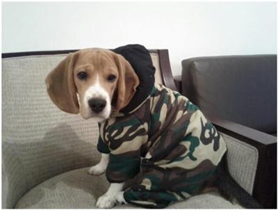 johnny beagle