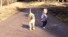 melhores-amigos-cachorro-crianca