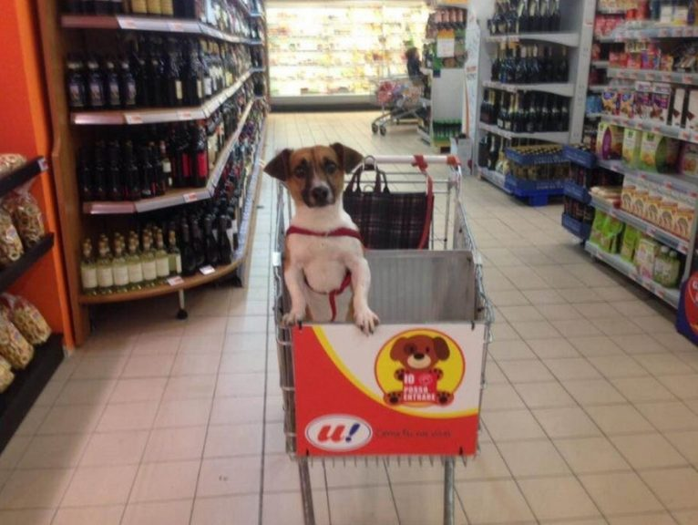 mercado cachorro 01