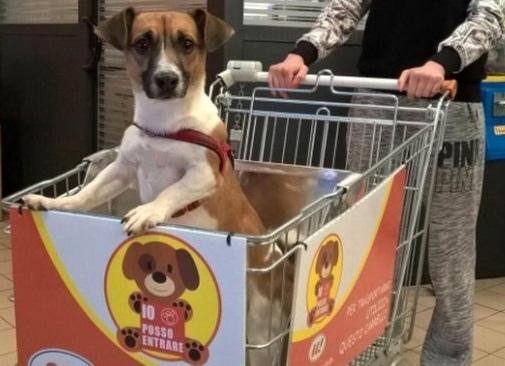mercado cachorro 03