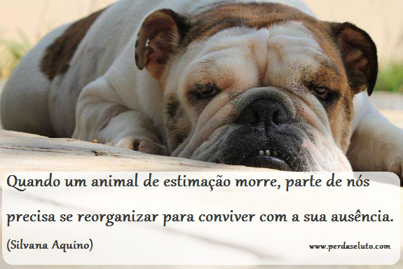 morte animal estimacao