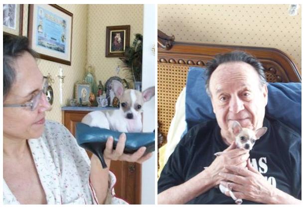nome-cachorros-celebridades-chaves-Roberto-Bolaños-florinda-pancho