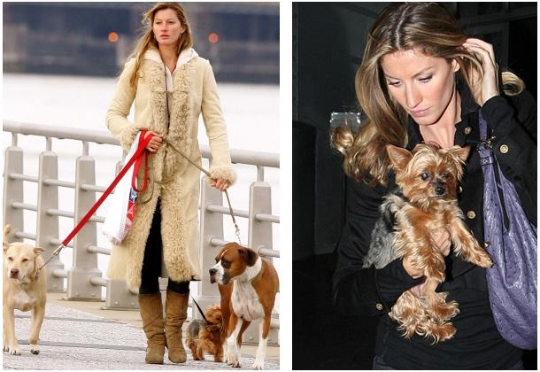 nome-cachorros-celebridades-gisele-bundchen-yorkshire-vida