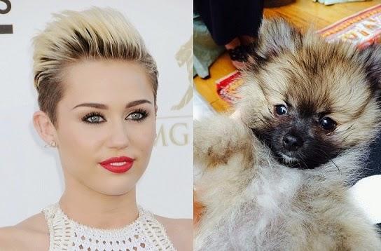 nome-cachorros-celebridades-miley-cyrus-moonie