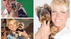 nome-cachorros-celebridades-xuxa-yorkshare-dudu