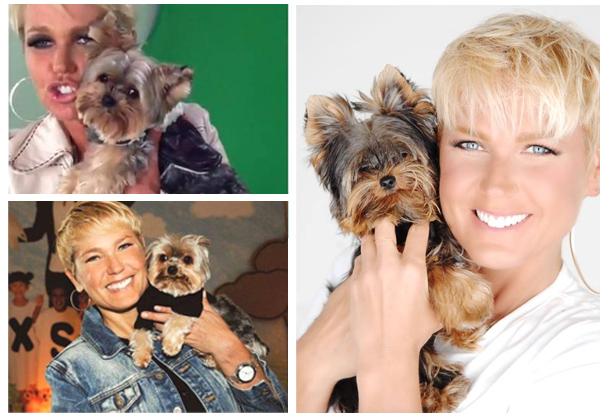 nome-cachorros-celebridades-xuxa-yorkshire-dudu