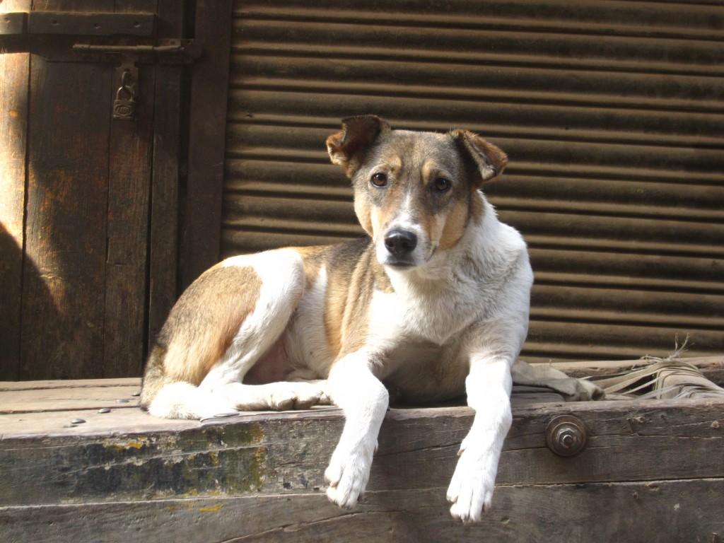 o que fazer se encontrar um cachorro na rua