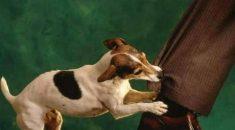 problemas comportamentais cachorro