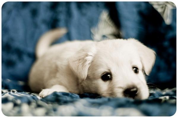 puppyeyes-12