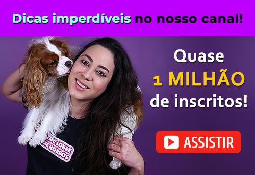 Canal Tudo Sobre Cachorros no YouTube