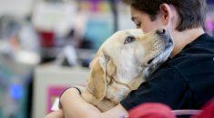 seu cachorro ama voce