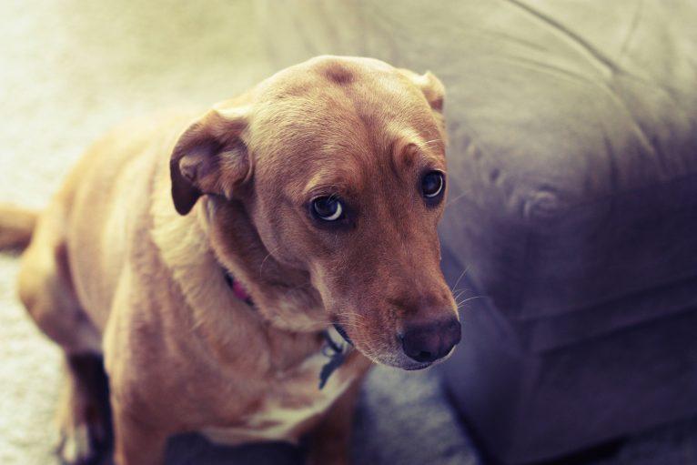 so quem tem cachorro entende 7