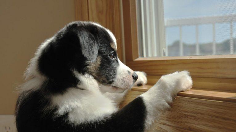 so quem tem cachorro entende 8