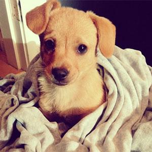 sonhar com cachorro filhote