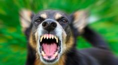 teste-ataque-cachorro