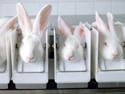 teste em animais