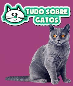 tudo sobre gatos